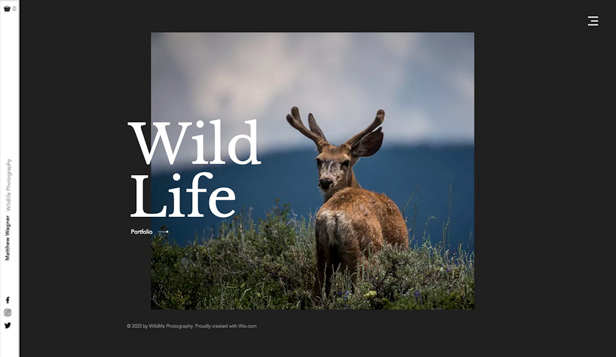 写真 website templates – Wildlife Photography